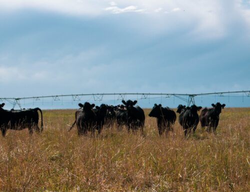 Is Beef Destroying the Environment?